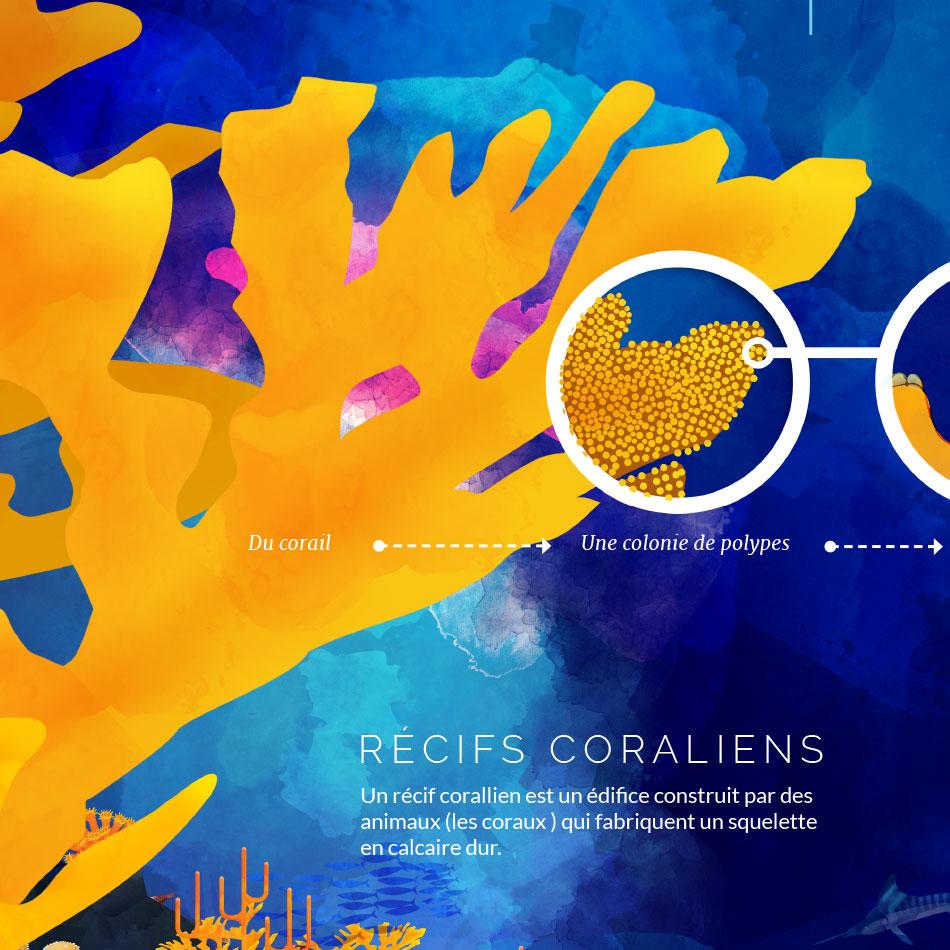 Planche didactique sur le corail – Cayoli